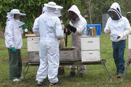 beekeeping home page